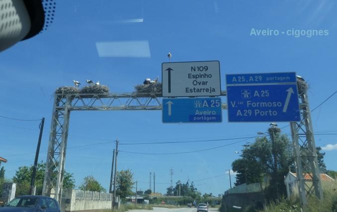 Quelques photos Cigognes_Aveiro_2
